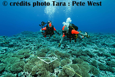 tara_expeditions_1.jpg